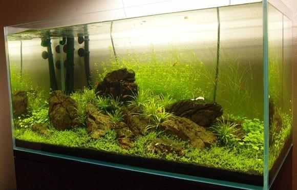 Уход за аквариумными рыбками