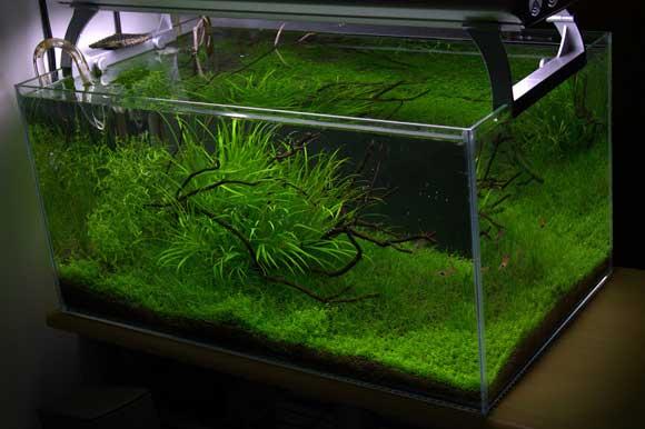 Аквариумные растения содержание и уход