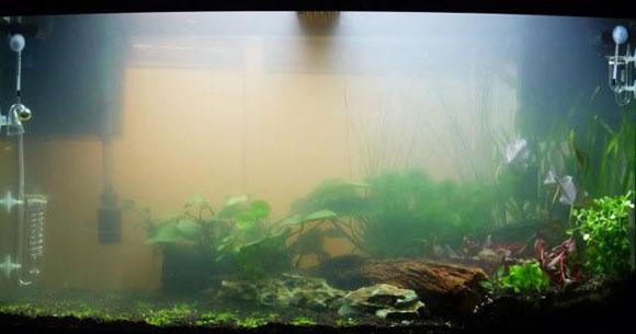 От чего мутнеет вода в аквариуме