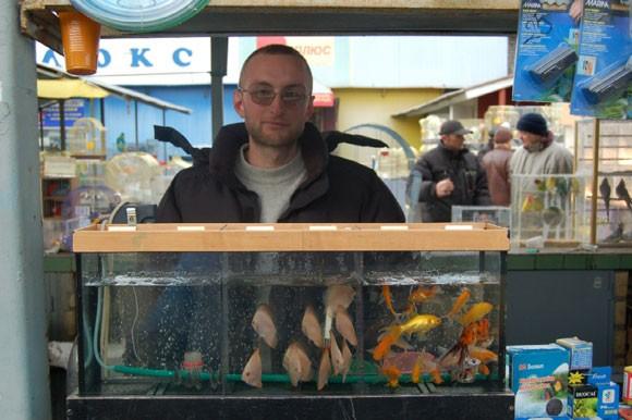 Разведение аквариумных рыбок как бизнес