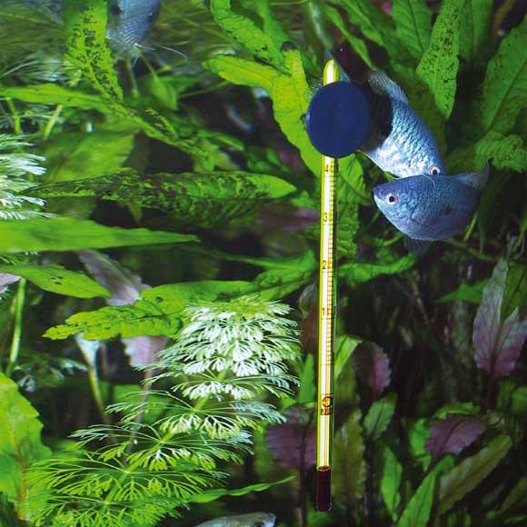 Температура воды для рыбок