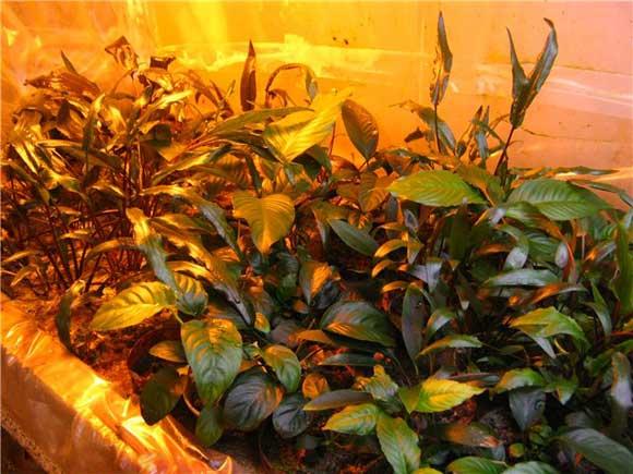 Аквариум для растений