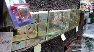 Бизнес на аквариумных рыбках