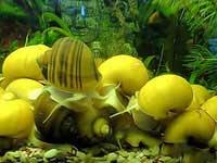 Уход за аквариумом и рыбками