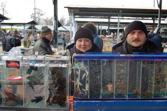 Где купить аквариумных рыбок