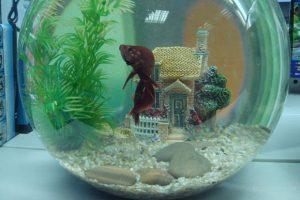 Уход за круглым аквариумом