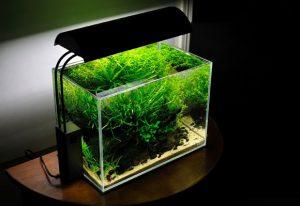 Уход за маленьким аквариумом