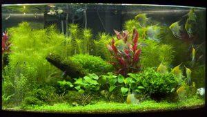 Как красиво оформить аквариум