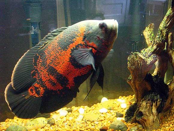 Стимуляторы роста для рыбы