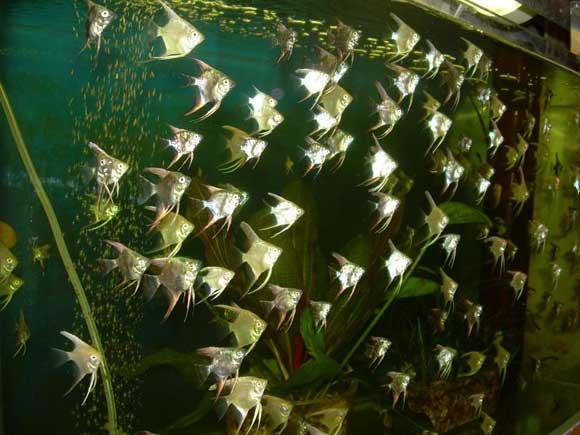 Как выбрать аквариум