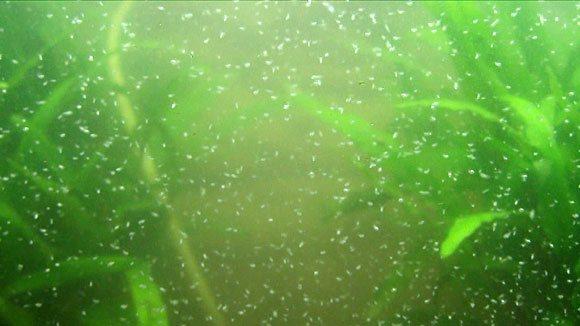 Как выращивать живой корм для рыбок в домашних условиях?