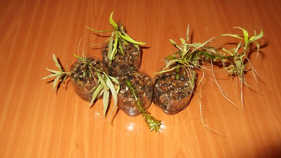 Аквариумные растения в горшочках