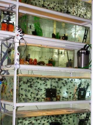 Рыборазводня аквариумных рыб
