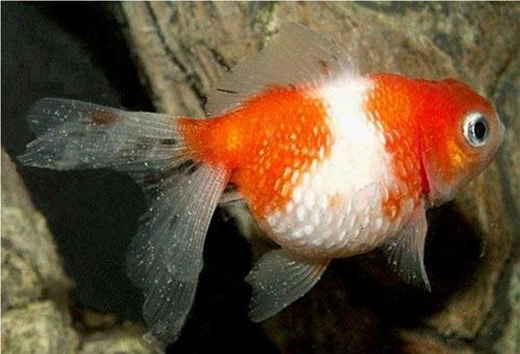 Карантин для аквариумных рыб