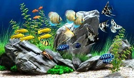 Количество рыб в аквариуме