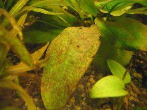 Борьба с бурыми водорослями