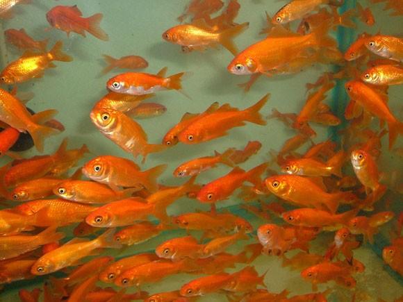 Как правильно выбрать рыб-советы рыборазводчику