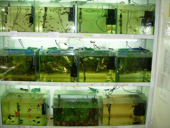 Зоомагазин с рыбками