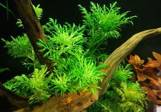 Почему не растут аквариумные растения