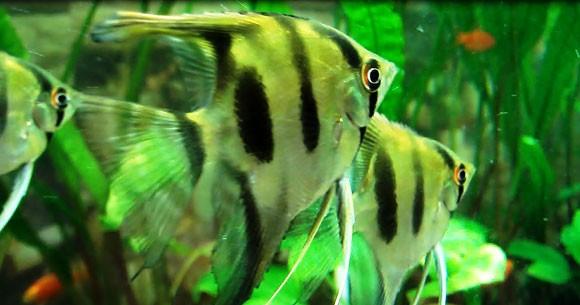 Корм для рыб на карантине