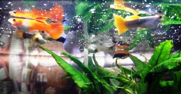 Уже здоровы-лечим рыб правильно