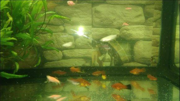 Гигиенический аквариум