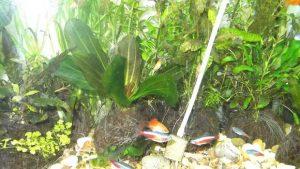 CO2 в аквариум своими руками