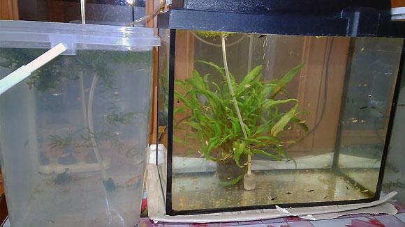 Мальки в аквариуме что делать?