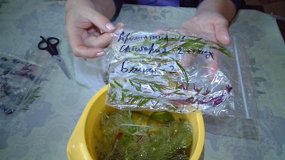 Интернет магазин аквариумных растений