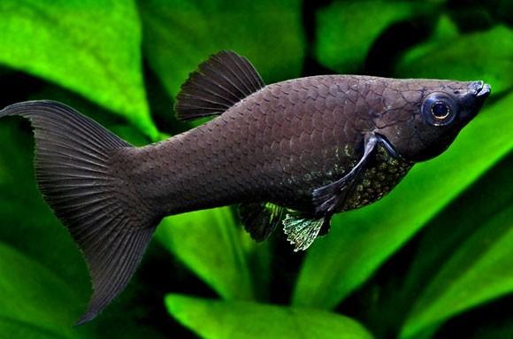 Можно ли покупать выбракованных рыб