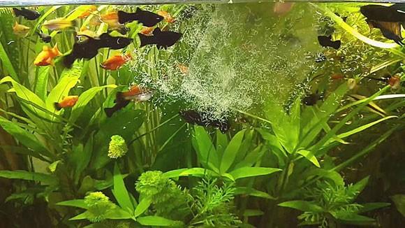 Какой живой корм для аквариумных рыбок лучше