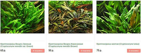Аквариумные растения почтой