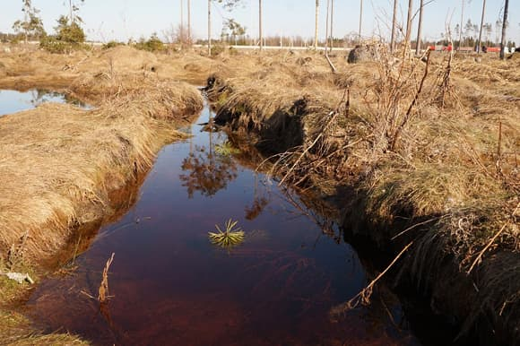 Почему необитаемые весенние водоемы