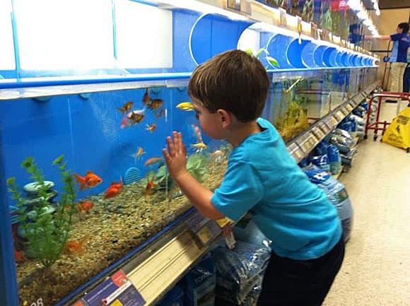 Покупайте рыбок с выгодой