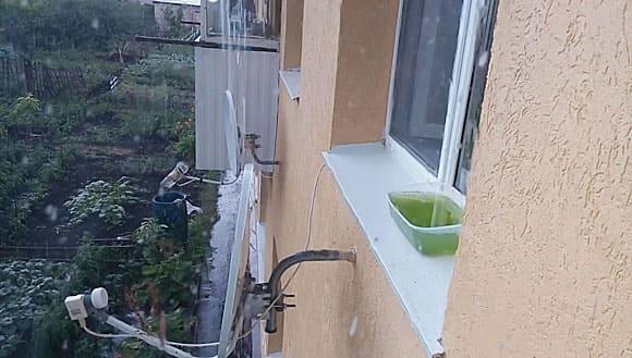 Дафния на отливе окна
